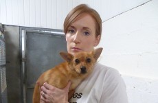 Rescue charity concerned about change of dog pound