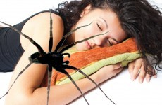 Debunked: Do you really eat a dozen spiders in your sleep every year?