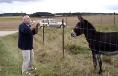What? You've never seen a donkey/trumpet duet before?