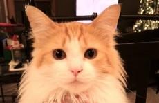 Cat revenge is the best revenge of all