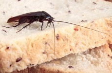More than one million cockroaches escape from China farm
