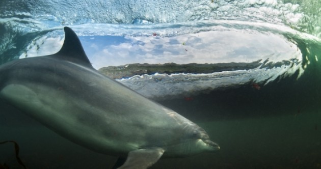 'Surfing dolphin' pic scoops prestigious award for Clare-based photographer