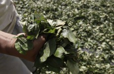 Peru's coca growers being encouraged to switch to... coffee plants