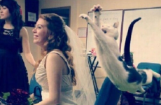 11 pets who really want to be part of your wedding