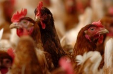 Thousands of chickens die in farm fire