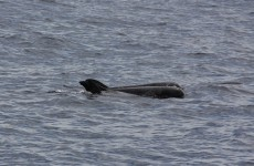 Sonar mapping for oil killed Madagascar whales: study