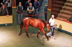This lovely horse sold for €2,850,000 yesterday