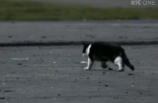 Over 40 complaints lodged over Love/Hate cat shooting scene