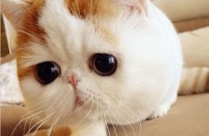 Prepare to fall in love with China's most popular cat