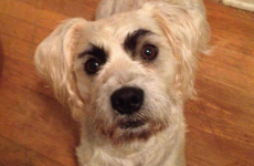 9 dogs who are definitely eyeing you up