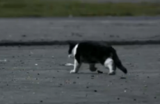 Love/Hate cat to appear on tonight's Late Late Show