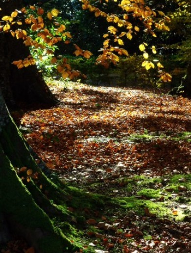 Your Photos: More amazing autumnal pics taken by you