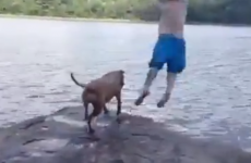 Dog thinks owner is drowning, so jumps into water to save him