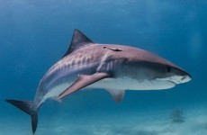 Man gets in fist-fight with shark... and wins