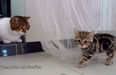 This is definitely the cutest kitten stand-off you'll see today
