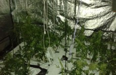 Cannabis growhouse found in Drogheda