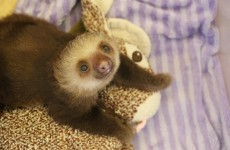Meet the Sloths is the TV series about sloths you've been waiting for
