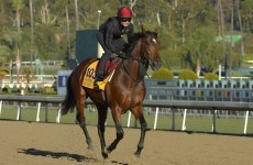 Declaration of War: the horse carrying Irish hopes in $5m Breeders Cup Classic