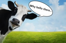 This $110 cologne will make you attractive to cows