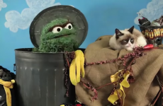 Oscar the Grouch and Grumpy Cat had a misery-off
