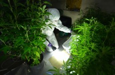 Two arrested after large-scale cannabis growhouse uncovered in Ballymena