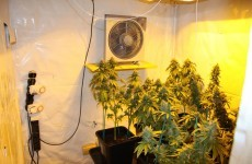 """Elaborate grow house"" in Waterford yields €470,000 worth of seized cannabis"