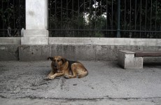 ISPCA shelters put down more strays than other agencies
