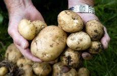 Price of potatoes drops by almost a third in one year
