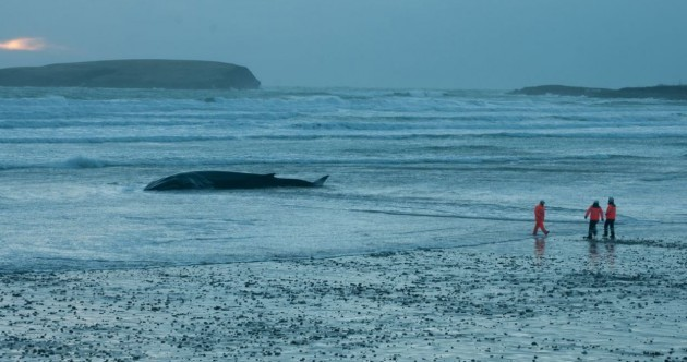 Pictures: Locals flock to see 20 metre fin whale washed up on Achill beach