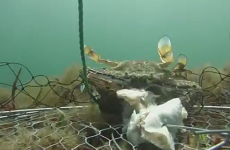 Watch what REALLY happens under the sea