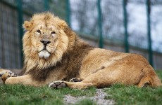Over one million people visited Dublin Zoo in 2013