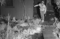 Suspected burglar caught in the act by wildlife presenter's camera