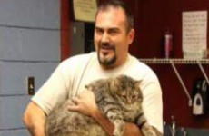 Animal shelter takes in enormous 2.5 stone cat