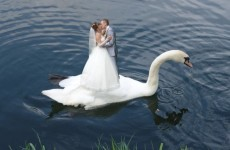 These are some of the most bizarre wedding images in existence