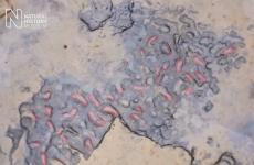 Earliest human footprints in Europe found on British beach