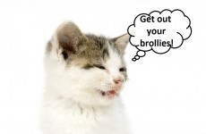 Your sneezing cat can predict* the weather