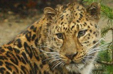Boy, aged 7, mauled by leopard at popular Kansas zoo