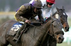 5 excuses to use if your horse loses at Cheltenham next week