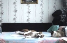 Sneaky dog defies orders, rolls around on owner's bed