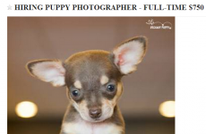 Need a new job? This pet shop wants a full-time puppy photographer