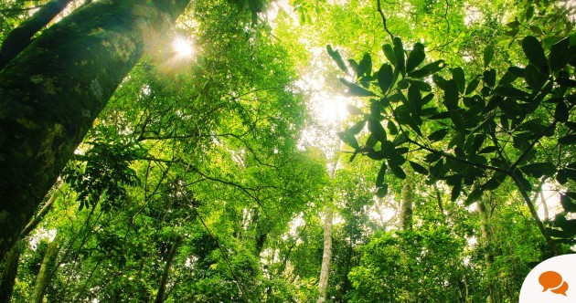 Column: Can big data save our planet's forests?