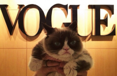 Grumpy Cat celebrated her birthday at Vogue magazine