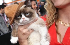 Grumpy Cat wore Pharrell's hat to the MTV Movie Awards