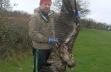 "Gardaí still carrying out ""extensive investigations"" over killing of white-tailed eagle"