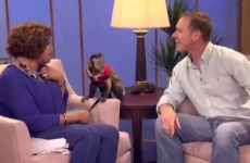 Chat show host teases monkey and gets a slap in return