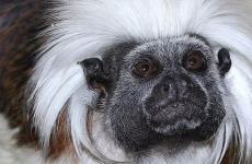 Four out of five stolen monkeys returned to Blackpool Zoo