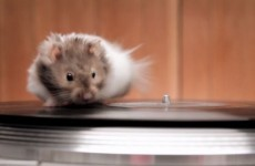 Just some mice, on turntables, running as fast as their little legs will carry them