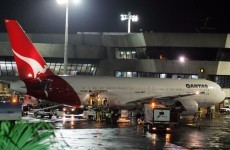 Rats on a plane: Qantas grounds flight after baby rodents found