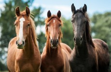 How many horses has your council seized this year?