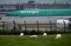 Aer Lingus management and union reps to hold talks at Dublin Airport today